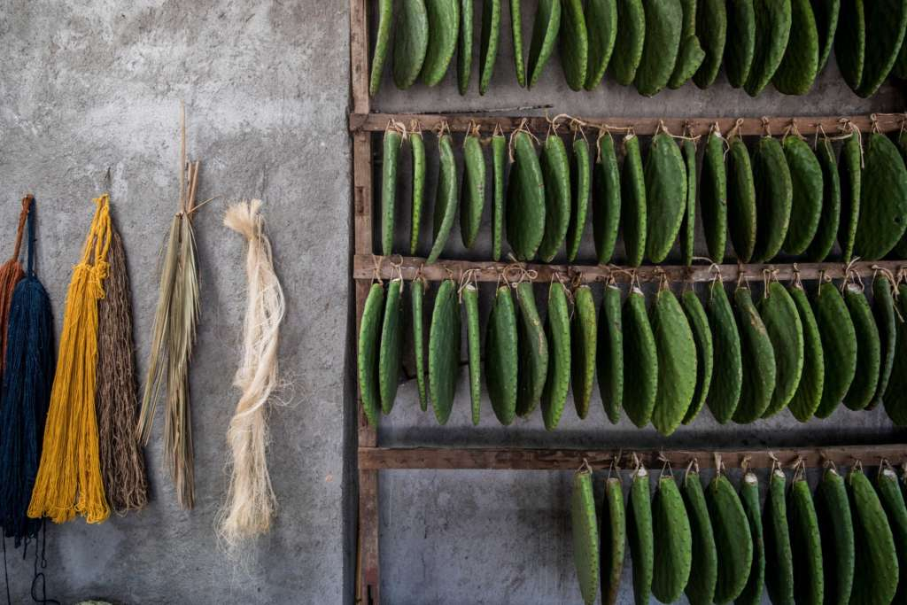 In the Gutiérrez family workshop, samples of colored wool, palm fronds and prickly pears.