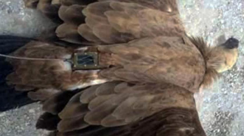 Israel Recuperates 'Spy Eagle' from Syria